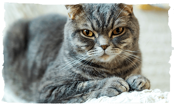 Cat pedicure Eastleigh and Southampton